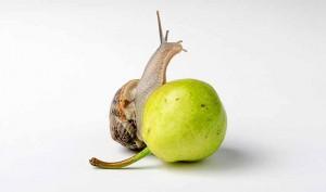 Beneficios de usar la baba de caracol en la piel